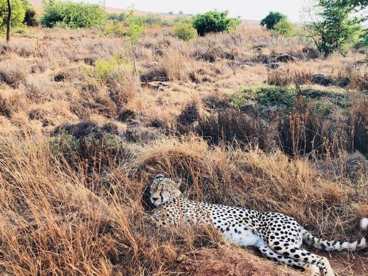 CheetahRL